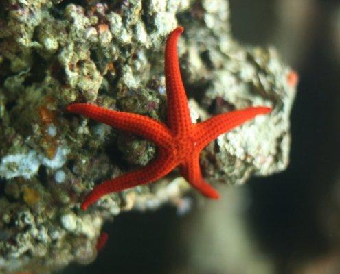 Stella Marina acquario dell'Elba